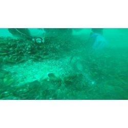 Започна подготовката за справяне с разлива на мазут в Черно море от потъналия край Созопол кораб Мопанг